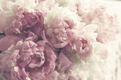Nálepka Fluffy růžové pivoňky květiny pozadí