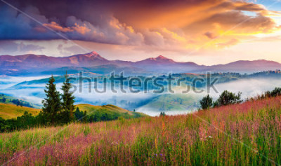 Nálepka Foggy summer sunrise in the Carpathian mountains. Colorful morning scene in the mountain valley. Beauty of nature concept background. Artistic style post processed photo.