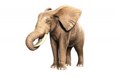 Nálepka Freigestellter slon v jídle (vykreslení obrazu)