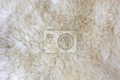 Fur Texture./Fur textury