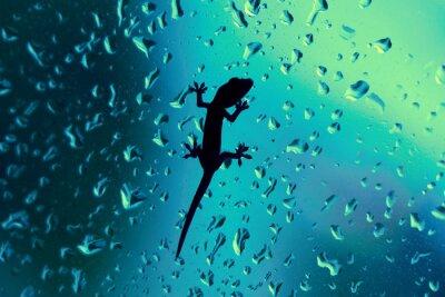Nálepka Gecko na skleněné okno Wet s kapkami deště