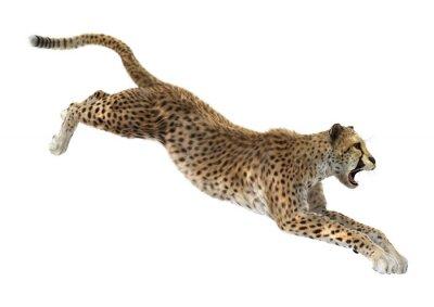 Nálepka Gepard