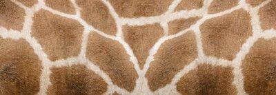 Nálepka Giraffe skin Texture - Image 1