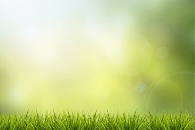Nálepka Grass and green nature blurred background