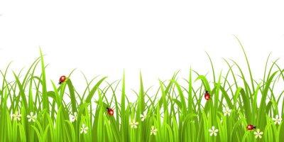 Nálepka Grass s beruška na bílém pozadí