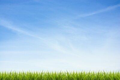 Nálepka Grass trávě pod modrou oblohou a mraky