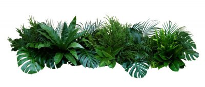 Nálepka Green leaves of tropical plants bush (Monstera, palm, rubber plant, pine, bird's nest fern) floral arrangement indoors garden nature backdrop isolated on white background, clipping path included.