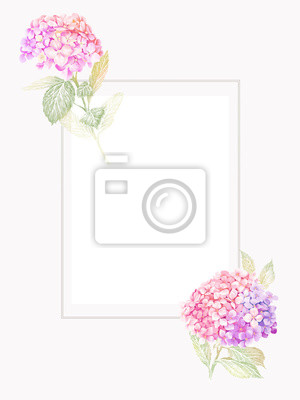 Hand-drawn hydrangea. Can be used as wedding element, floral design for cosmetics, perfume, beauty care products, greeting cards