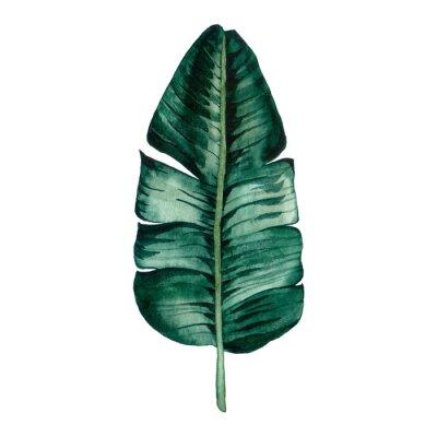 Nálepka Hand drawn watercolor tropical plants set. Exotic palm leaves, jungle tree, brazil tropic botany elements.