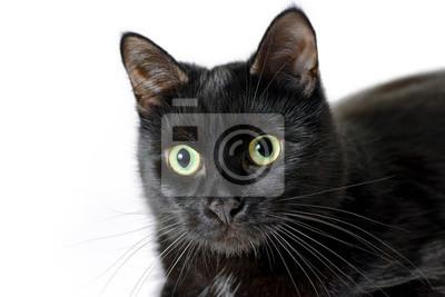 pic mladé černé kočičkymáma sex tamil