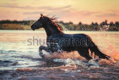 Nálepka Horse