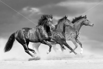 Nálepka Horse herd run in dust