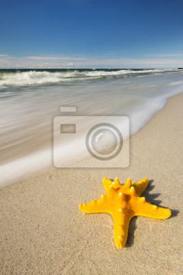 Hvězdice na pláži.