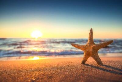 Nálepka Hvězdice na pláži při východu slunce