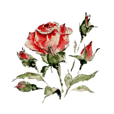 Nálepka Ilustrace červené růže