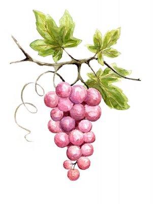 Nálepka Ilustrace - víno
