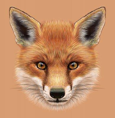 Nálepka Ilustrační Portrét Red Fox. Roztomilý načechraný tvář lesní Fox.
