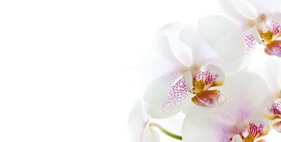 Nálepka isolierte Orchideenblüten