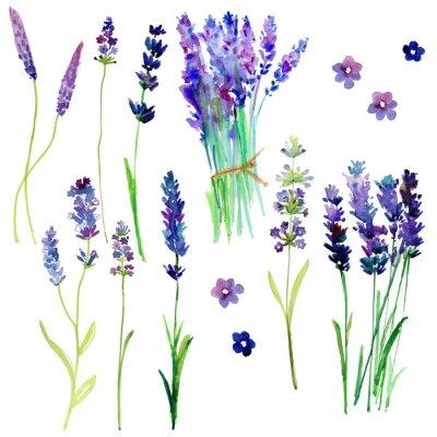 Nálepka Izolované Provence květy levandule. Akvarel květinové sada pro svůj design.