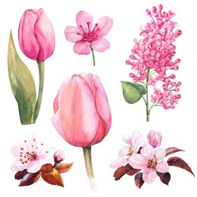 Nálepka jarní akvarel květ s Tulipán a Lila