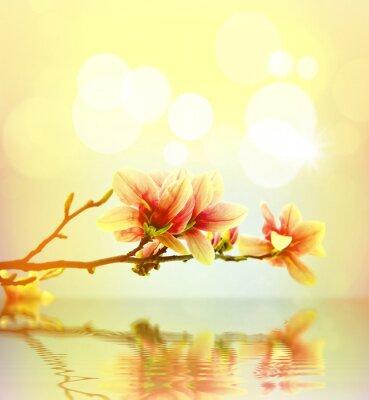 Nálepka Jarní květiny magnólie pozadí