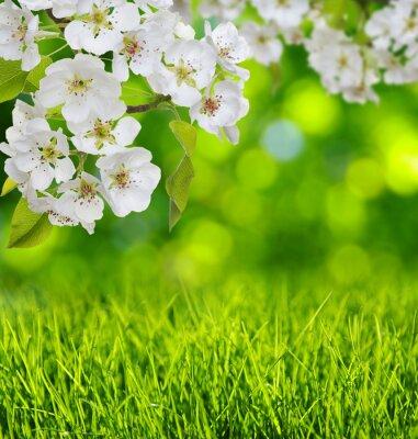 Nálepka Jarní květy a tráva