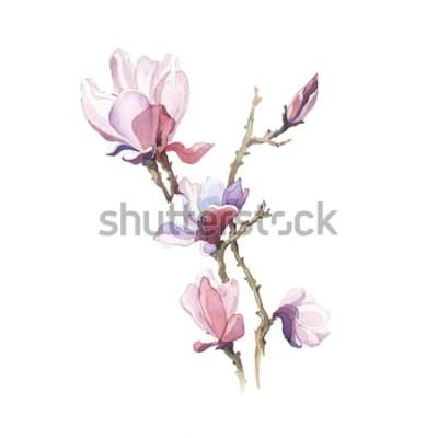 Nálepka Jarní magnólie akvarel květ izolovaných na bílém pozadí