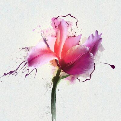Nálepka Jasně krásná tulipán na bílém pozadí. Rod trvalých bylinných cibulovitých rostlin rodiny Lily