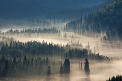 Nálepka jedle na louce dolů vůle k jehličnatého lesa v mlze horách