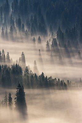 Nálepka jehličnatý les v mlze horách