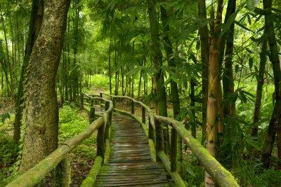 Nálepka Jungla de Tailandia con Puente de madera