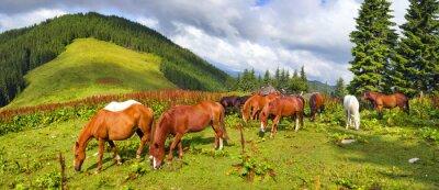 Nálepka Karpatské mustangs v Gorgany