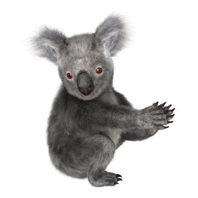 Nálepka koala