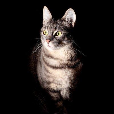 Nálepka Kočka, černé pozadí