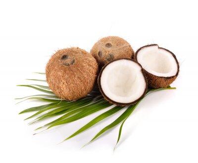 Nálepka kokos na bílém pozadí
