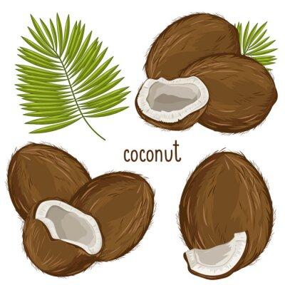 Nálepka Kokosový ořech izolované, vektor.