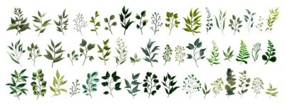 Nálepka Kolekce zelených listů rostlin lesní byliny tropické listy