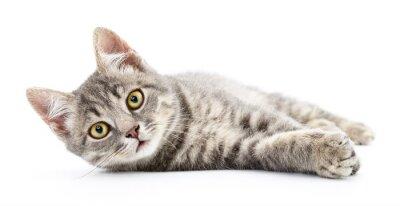 Nálepka Kotě na bílém pozadí