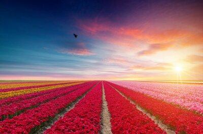 Nálepka Krajina s tulipány, tradiční holandské větrné mlýny a domy u kanálu v Zaanse Schans, Nizozemsko, Evropa
