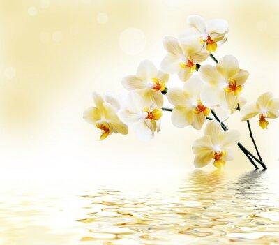 Nálepka Krásná bílá orchidej