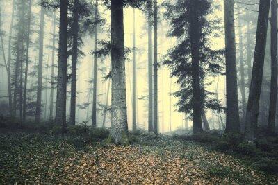 Nálepka Krásná mlhavo lesních stromů pohádka. Magie mlha světlo v lese.