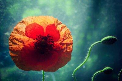 Nálepka Krásné máku květ proti jasně osvětlené zeleném pozadí, podsvícení