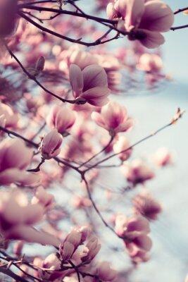 Nálepka Krásné růžové květy magnólie