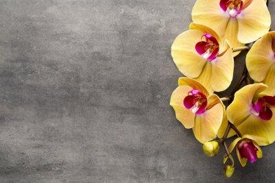 Nálepka Krásné růžové orchideje na šedém pozadí.