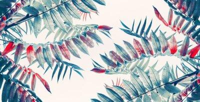 Nálepka Krásné tropické listy pozadí, banner