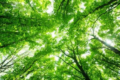 Nálepka krásné zelené lesy
