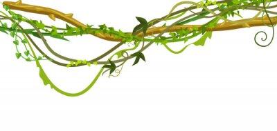 Nálepka Kroucená divoká liána větve nápis.