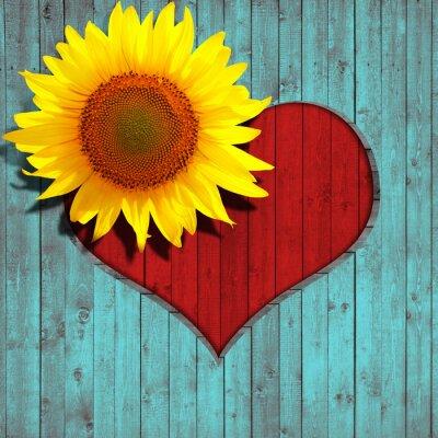 Nálepka květ slunečnice srdce a tyrkysové dřevo pozadí
