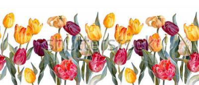 Nálepka Květinové horizontální border.barevné tulipány na bílém pozadí. Akvarel.