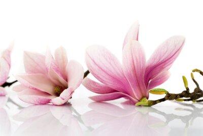 Nálepka Květiny